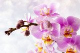 Beautiful pink orchid on a gray background. Kwiaty Obraz