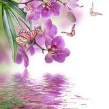 Floral background of tropical orchids and  butterfly Kwiaty Obraz