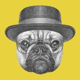 Portrait of French Bulldog with hat and glasses. Hand drawn illustration. Zwierzęta Plakat