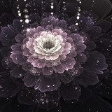 violet fractal flower with droplets of water  Kwiaty Plakat