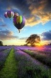 Hot air balloons flying over lavender landscape sunset  Pejzaże Plakat