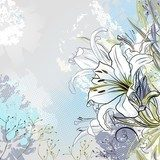 grunge greeting-card with decorative white lilies  Draw Flower Fototapeta
