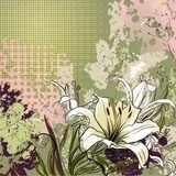 background  with lily  Draw Flower Fototapeta