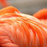 Close up feathers of flamingo  Zwierzęta Fototapeta
