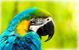 Exotic colorful African macaw parrot  Zwierzęta Fototapeta