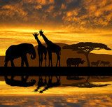Silhouette elephant,giraffes,rhino and zebras in the sunset  Zwierzęta Fototapeta