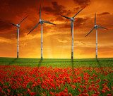 red poppy field with wind turbine  Zachód Słońca Fototapeta