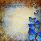 vintage grunge background with butterfly  Tekstury Fototapeta