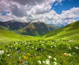 Fields of flowers in the mountains. Georgia, Svaneti.  Krajobraz Fototapeta