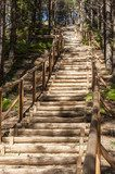 Wooden stairs in forest  Schody Fototapeta