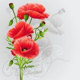 Red poppies on a gray background  Maki Fototapeta