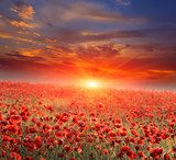 poppy field on sunset  Fototapety Maki Fototapeta