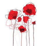 Red poppies on a white background  Maki Fototapeta