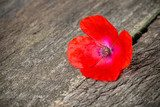 single red poppy flower on wooden surface  Fototapety Maki Fototapeta
