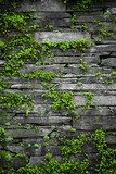 Old stone wall with leaves background  Mur Fototapeta