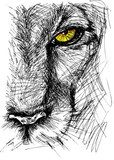 Hand drawn Sketch of a lion looking intently at the camera  Zwierzęta Obraz