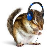 Funny chipmunk listening to music on headphones  Zwierzęta Obraz