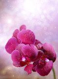Beautiful blooming orchid  on light color background  Obrazy do Salonu SPA Obraz