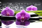Spa still life with set of pink orchid and stones reflection  Obrazy do Salonu SPA Obraz
