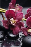 set of branch gorgeous red orchid on stones reflection  Kwiaty Obraz