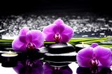Spa still life with set of pink orchid and stones reflection  Kwiaty Obraz