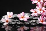 Set of frangipani with zen stones  Kwiaty Obraz