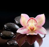 Zen Stones and Orchid Flower. Stone Massage  Kwiaty Obraz