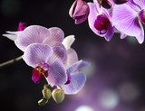 Beautiful orchids  Kwiaty Obraz