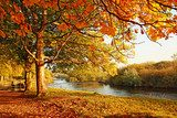 Beautiful Autumn in the park  Las Fototapeta
