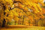 Autumn / Gold Trees in a park  Las Fototapeta