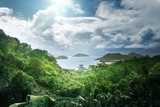 jungle of seychelles island  Las Fototapeta