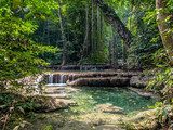 Lianas in the rainforest. Erawan National Park in Thailand  Las Fototapeta