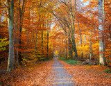 Pathway in the autumn forest  Las Fototapeta