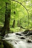 Forest stream surrounded by spring vegetation  Las Fototapeta
