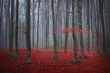 Red tree in a foggy autumn forest with red leaves on the ground  Las Fototapeta