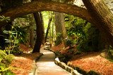 Mystical Park. Old Trees and Ancient Stone Bridge. Pathway  Las Fototapeta
