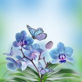 Floral background of tropical orchids and  butterfly  Motyle Fototapeta