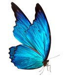 butterfly macro background  Motyle Fototapeta