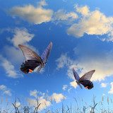 Butterfly and beautiful sky and cloud  Motyle Fototapeta