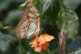 Colored butterfly on an orange flower.  Motyle Fototapeta