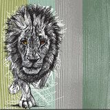 Sketch of a big male African lion  Drawn Sketch Fototapeta