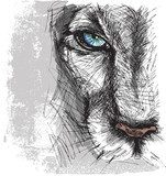 Hand drawn Sketch of a lion looking intently at the camera  Drawn Sketch Fototapeta