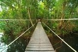 Bridge to the jungle,Khao Yai national park,Thailand Mosty Fototapeta