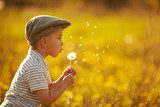 cute little boy with dandelions  Dmuchawce Fototapeta