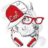 Pitbull in cap and headphones. Dog vector. Cool dog. Zwierzęta Obraz
