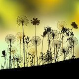 Floral background with dandelion  Dmuchawce Fototapeta