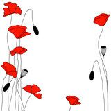 floral background with red poppies Maki Fototapeta