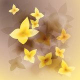 Sunny flowers / Floral square background with golden blooms  Kwiaty Fototapeta