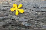 yellow flower on dark wood Tekstury Fototapeta