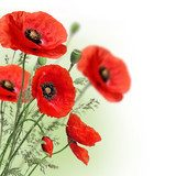 Poppies flowers border Maki Fototapeta